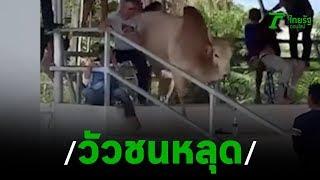 ระทึก! วัวชนหลุดไล่ขวิดเซียนพนันสาวบาดเจ็บ | 18-02-63 | ข่าวเช้าหัวเขียว