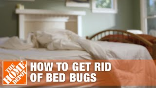 How to Get Rid of Bed Bugs | DIY Pest Control | The Home Depot