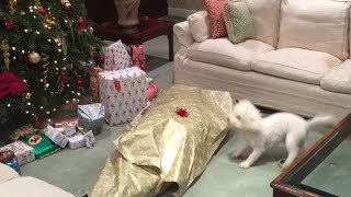 Dog Unwraps Owner for Christmas