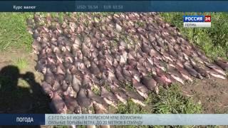 Ловля рыбы в период нереста статья