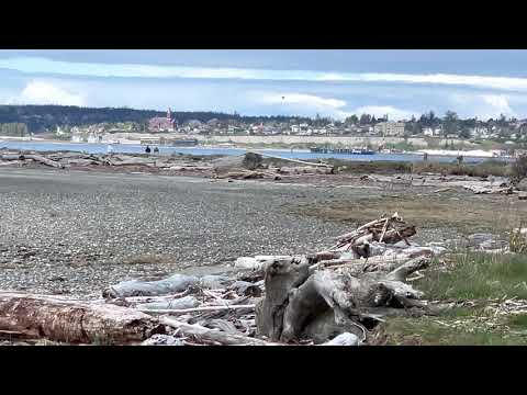 Scanning our shoreline and across the bay towards Port Townsend WA.