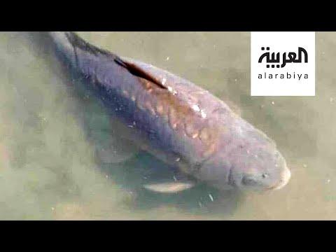 العرب اليوم - شاهد: حداد في زامبيا على سمكة ورئيس البلاد ينعيها