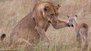 TOP 10 Increíbles Animales Salvando A Otros Animales  || TOP 10 VÍDEOS