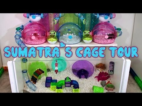 Sumatra's Hamster Cage Tour - May 2014