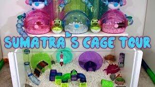Sumatras Hamster Cage Tour - May 2014