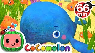 Baby Blue Whale Song | +More Nursery Rhymes & Kids Songs - Cocomelon (ABCkidTV)