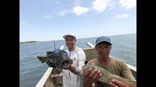 雄烽组合开渔期出海拉大网,抓到一条巨型石斑鱼,整船都沸腾了