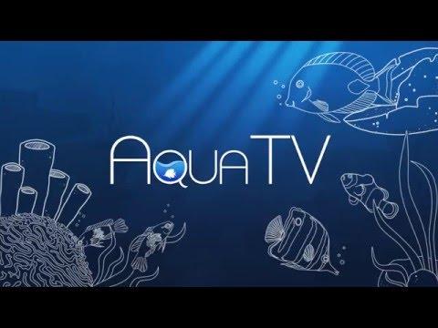 Aqua TV Overview thumbnail