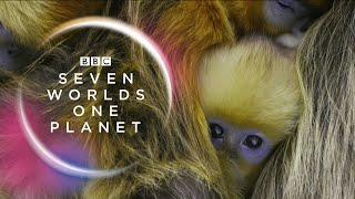BBC announces its new series: Seven Worlds, One Planet