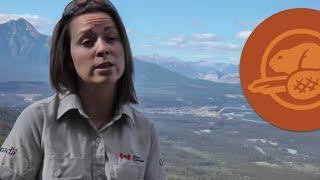Keeping the Wild in Wildlife -- Canada's Greatest Summer Job
