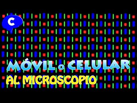 Cosas cotidianas al microscopio