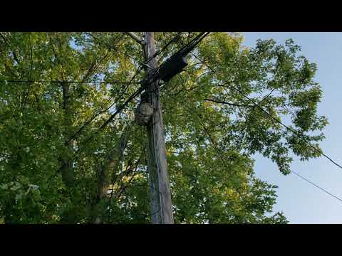 What happens when the city workers of Neptune, NJ find a large hornet on a telephone pole? They call Cowleys!