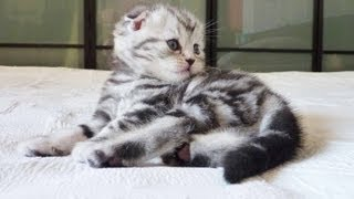 Cutest Cat Moments. The first 30 days of a kitten. AWW