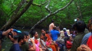 Mangrove Boat Trip, Limestone Caves