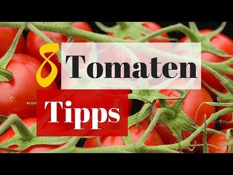 8 Tipps für eine große Tomatenernte - Erfolgreich im Hochbeet Tomaten ziehen