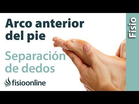Separación de dedos y ensanchamiento del arco anterior del pie