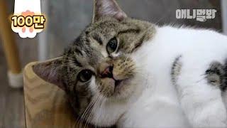 이 고양이를 아시나요  l  Does Anyone Know This Munchkin Cat?