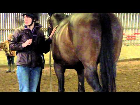 Equine Massage for Horse Owners Demonstration Part 2 of 3