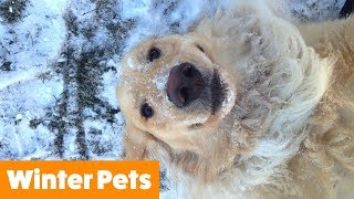 Funniest Winter Animals | Funny Pet Videos