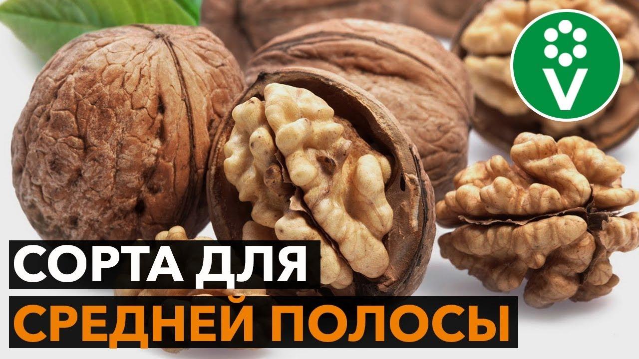 ЭТИ ГРЕЦКИЕ ОРЕХИ не боятся морозов! Обзор белорусских сортов