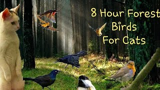 8 Hour Forest Birds For Cats To Watch