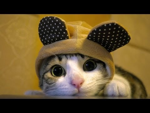 Funny compilation – best cat moments!