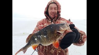 Зимняя рыбалка на крупного окуня.