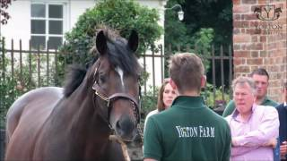 Yorton Breeders Club Launch - with Alan King - 9th September 2016