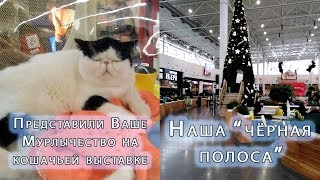 Наш магазин на международной кошачьей выставке и наша чёрная полоса