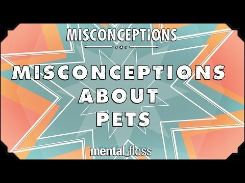 This Video Debunks 10 Misconceptions About Pets