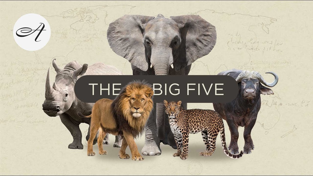 The Big Five with Audley Travel