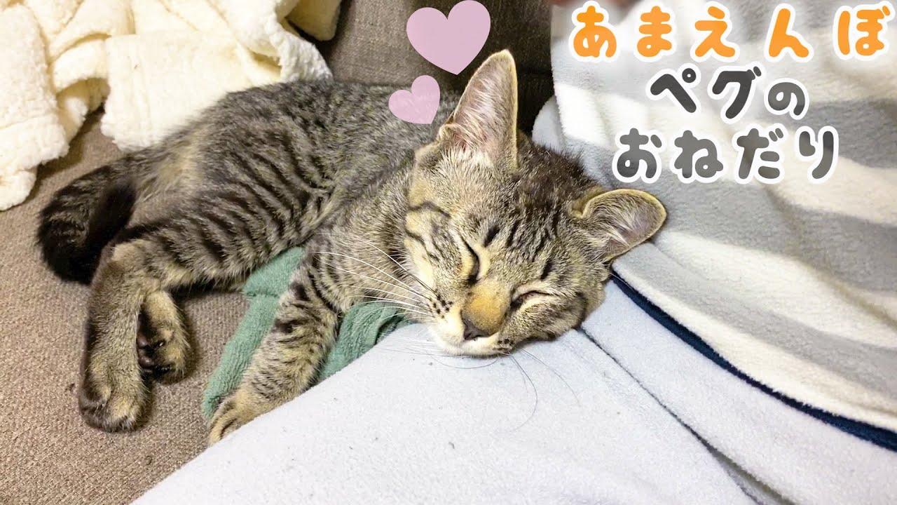抱っこ大好き子猫の甘えん坊攻撃にデレデレになるパパ
