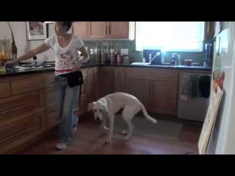 Yellow Lab Goes Through The Learn to Earn Program