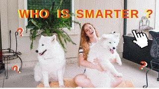Testing My Dogs Intelligence + MY FINAL PUPPY UPDATE!!!