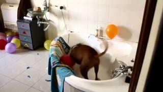 Самое смешное видео про собак(по версии medicine-free.ru)