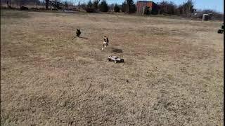 Веселая собачка поднимает настроение | Приколы до слез - Collab #68
