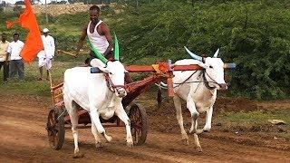 Nimishada Bandi Bullock Cart Race At Lokapur # 1