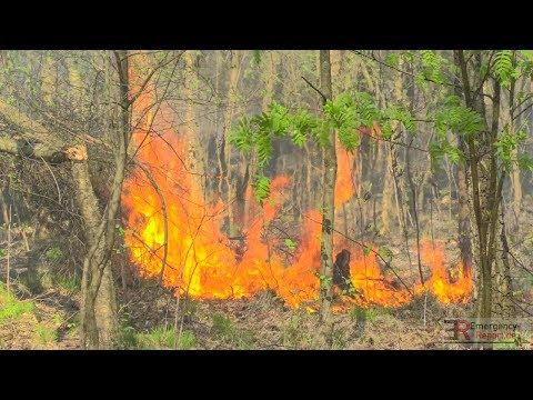 [GROSSER WALDBRAND IN HILDEN] - 25 Hektar Wald in Flammen   Großeinsatz der Feuerwehr -