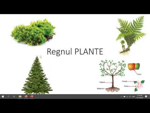 Paraziți naturali din organism