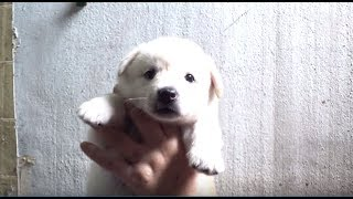 Hey, Come And Check How My Dog Mom Plays Push-Pull With Grandma (Part 1)   Kritter Klub