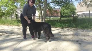Comment apprendre le rappel à son chien – niveau 1