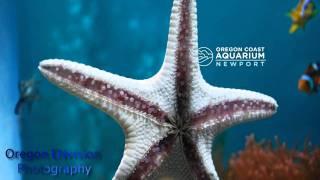 Star Fish 3