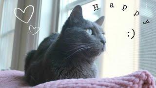 How to Keep Indoor Cats Happy