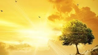 """Peaceful Music, Relaxing Music, Instrumental Music """"Wilderness"""" by Tim Janis"""