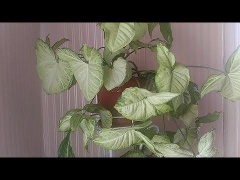 Комнатные пестролистные и зеленые растения🌱🍀🌿 красный угол в гостинной🏠