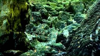 preview picture of video 'Cerknica - Zeleni kras (predstavitveni film SLO)'