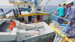 China Fishery Group - Peruvian Fishmeal and Fish Oil Operations