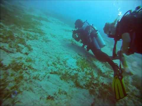 Highlights of marine life while scubadiving in Aqaba - Jordan (2013)