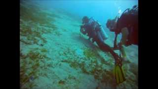 preview picture of video 'Highlights of marine life while scubadiving in Aqaba - Jordan (2013)'