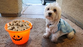 PUPPY GOES TRICK OR TREATING FOR THE FIRST TIME!! (HALLOWEEN CANDY FUN IN PUPPY COSTUME)